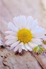 Preview iPhone wallpaper White daisy flower, wood board