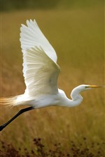 Preview iPhone wallpaper White heron flying, grass