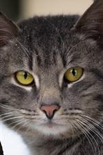 Aperçu iPhone fond d'écranLes yeux jaunes chat gris vous regardent