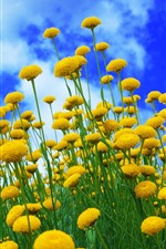 Preview iPhone wallpaper Yellow flowers, blue sky