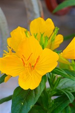 Yellow flowers, green leaves, spring