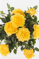 Preview iPhone wallpaper Yellow roses, bouquet, white background