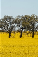 Preview iPhone wallpaper Yellow world, rapeseed flowers, trees