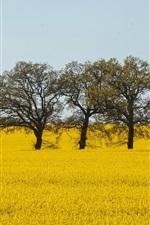 iPhone обои Желтый мир, цветы рапса, деревья