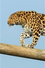 Preview iPhone wallpaper Amur leopard walk, trunk