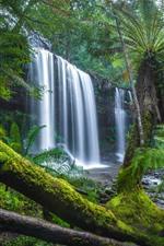 Preview iPhone wallpaper Australia, Tasmania, jungle, trees, waterfall, moss