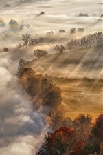 Preview iPhone wallpaper Autumn, fog, trees, morning, sun rays