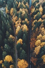 Preview iPhone wallpaper Autumn, forest, trees, roads, top view