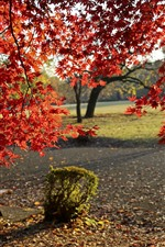 Preview iPhone wallpaper Autumn, park, red maple leaves