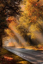 Preview iPhone wallpaper Autumn, trees, fog, road, sunshine