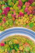 Preview iPhone wallpaper Autumn, trees, forest, road, car, top view