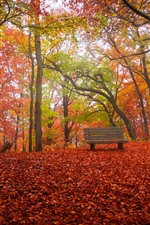 Preview iPhone wallpaper Autumn, trees, red leaves ground, bench, park
