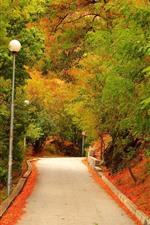 Autumn, trees, road, lamp