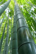 Preview iPhone wallpaper Bamboo forest, green, summer
