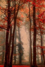 Preview iPhone wallpaper Beautiful autumn, trees, red leaves, fog, forest