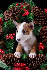 Berries, wreath, puppy