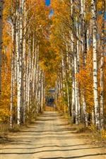 Vidoeiro, árvores, caminho, canal
