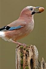 Preview iPhone wallpaper Bird, acorn, stump