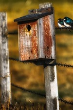 Preview iPhone wallpaper Birdhouse, fence, grass, two birds