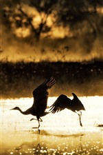 Preview iPhone wallpaper Birds, lake, morning, sunshine