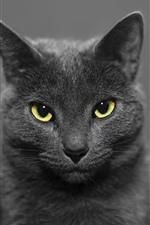 iPhone обои Черная кошка спереди, желтые глаза, туманные