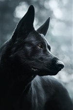 Preview iPhone wallpaper Black dog, hazy