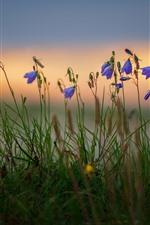 Preview iPhone wallpaper Blue flowers, grass, bokeh