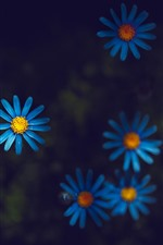 Preview iPhone wallpaper Blue petals wildflowers, darkness