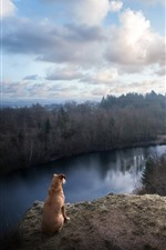 Preview iPhone wallpaper Brown dog, look, river, forest, fog