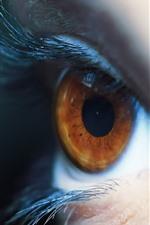Preview iPhone wallpaper Brown eye, eyelash, macro photography