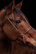 Preview iPhone wallpaper Brown horse, head, black background