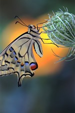 Preview iPhone wallpaper Butterfly, swallowtail, plants