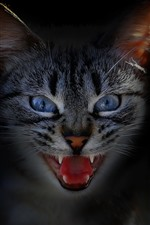 Preview iPhone wallpaper Cat, face, teeth, black background