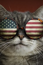 Preview iPhone wallpaper Cat, glasses, USA flag, funny animal