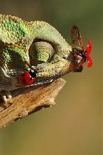 Preview iPhone wallpaper Chameleon catch insect