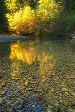 Preview iPhone wallpaper Clear water, river, stones, trees, autumn