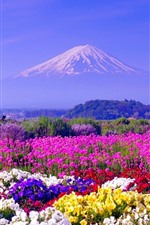 Preview iPhone wallpaper Colorful flowers, spring, Mount Fuji, Japan