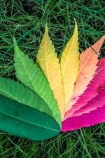 Folhagem colorida, grama verde