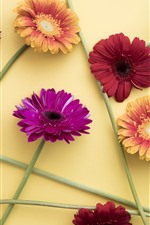Preview iPhone wallpaper Colorful gerbera, pink, red, purple, orange