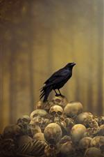 Crow, skulls