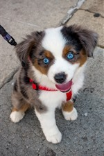 Preview iPhone wallpaper Cute blue eyes puppy, pet