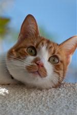 iPhone обои Симпатичный котенок, боке