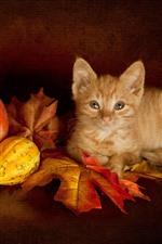 Cute kitten, maple leaves, pumpkin