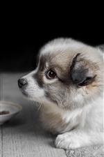 Cute puppy, floor, bokeh