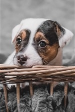 Preview iPhone wallpaper Cute puppy rest, basket