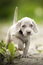 Preview iPhone wallpaper Cute puppy walking, grass, bokeh