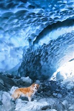 Preview iPhone wallpaper Dog, cave, snow