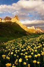 Preview iPhone wallpaper Dolomites, mountains, yellow flowers, nature landscape