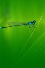 Preview iPhone wallpaper Dragonfly, grass, green background
