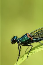 Preview iPhone wallpaper Dragonfly, insect, grass, green background